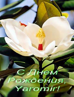 Поздравление кавказское здоровье фото 354