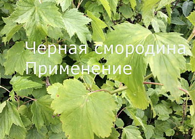 zelebno