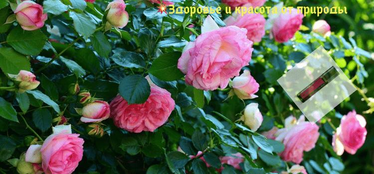 Волшебное_масло_розы
