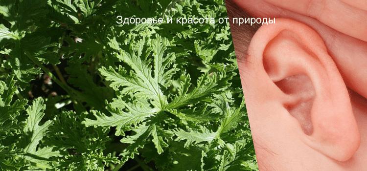 Лечение шума в ушах и голове народными средствами эфирными маслами