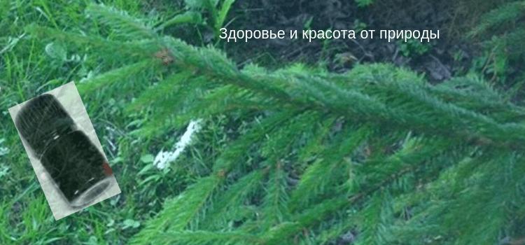 Хвоные_народные_рецепты_для_суставов
