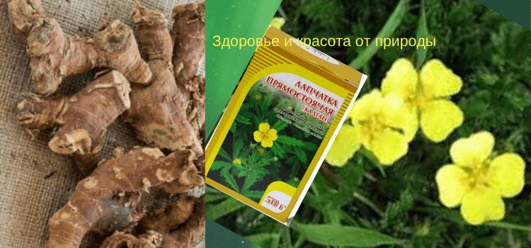 Корень_калгана+Народные_рецепты